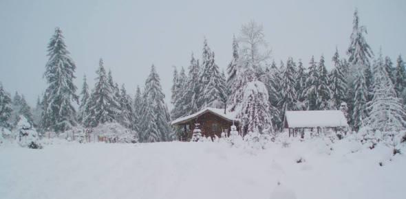 A Snowy Christmas 2008