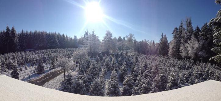 sunny-christmas-trees